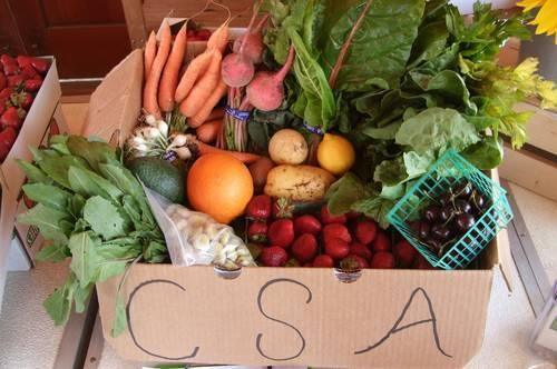 Food Justice Research