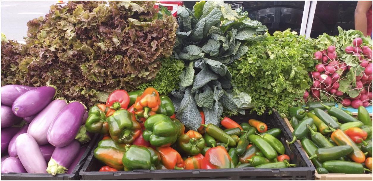 Central Brooklyn Food Democracy Project